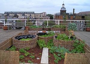 Landbouw in de stad